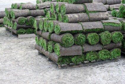Trawniki zak adanie i piel gnacja ogrod w for Giardino sempre verde
